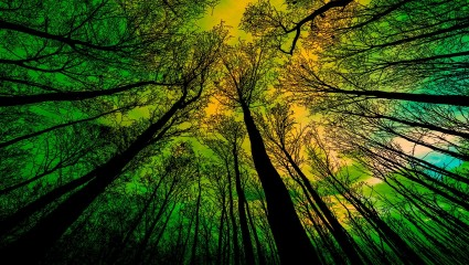 Why forests are important for our climate?