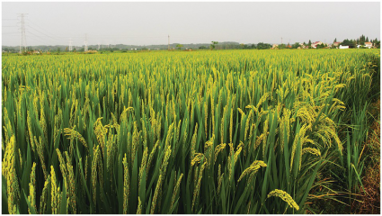 Rice brokers composes meeting on agri-youngsters awareness in Islamabad