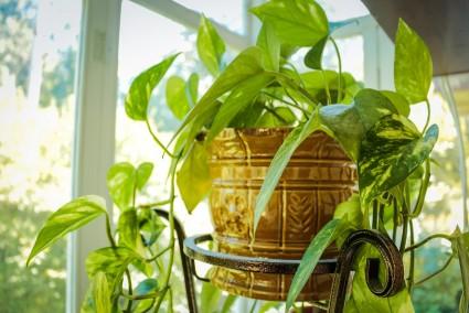 Common Reasons Why Indoor Plants Die